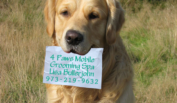 4 paws mobile grooming spa conta for 4 paws grooming salon